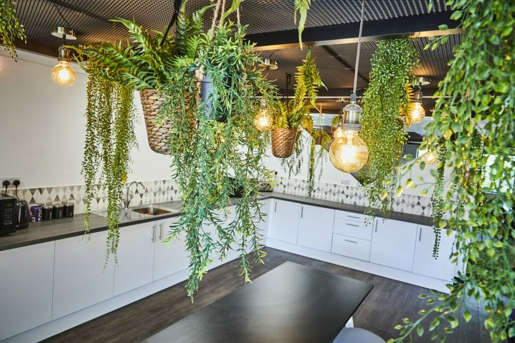 Hanging plants and filament lightbulbs above the table in an office kitchen area.